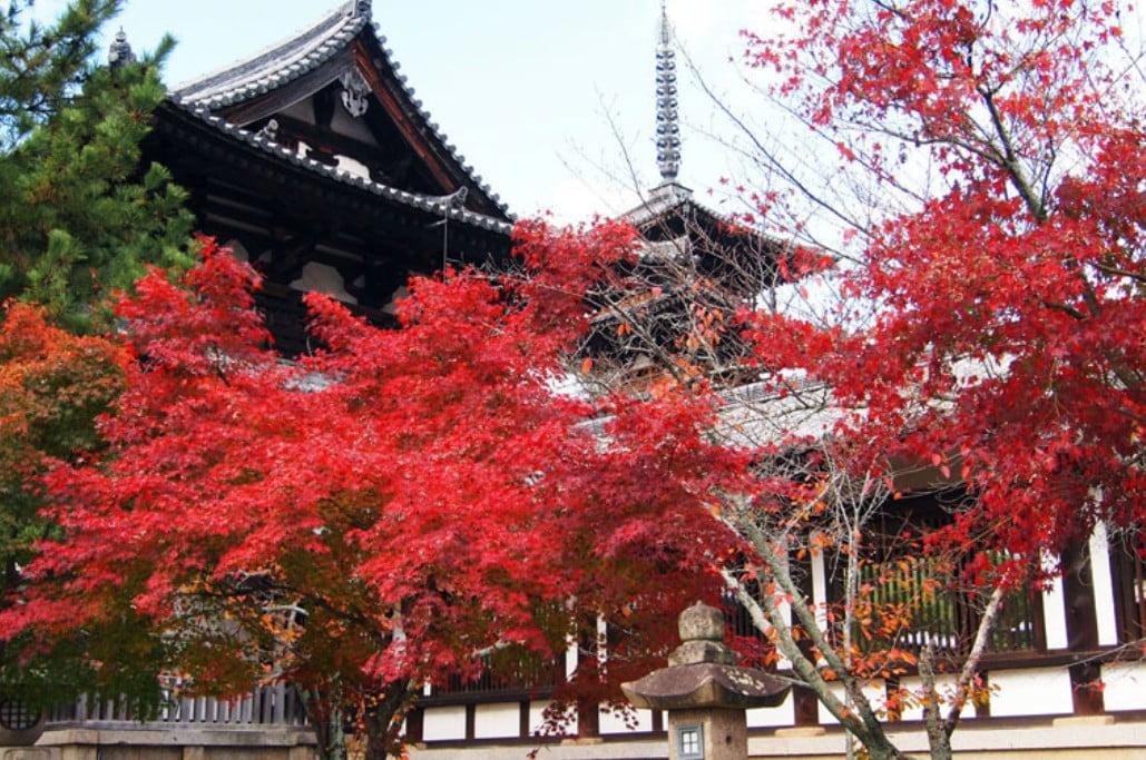 法隆寺の秋の紅葉(モミジ狩り)が楽しめる場所