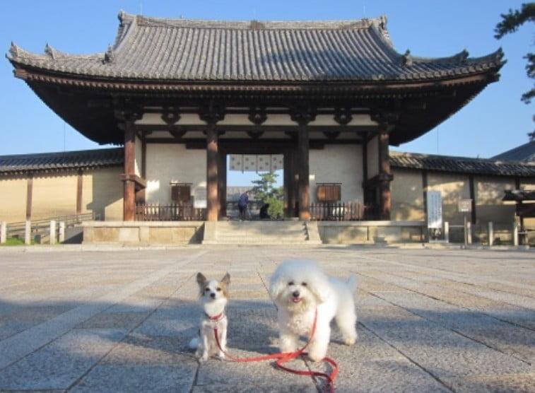 奈良・法隆寺にペット(犬・猫)を連れて入れる?
